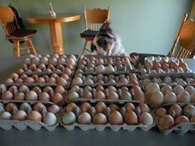 eggsnow
