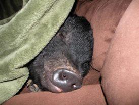 sleepybub-png11