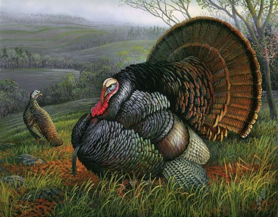 turkeypainting5