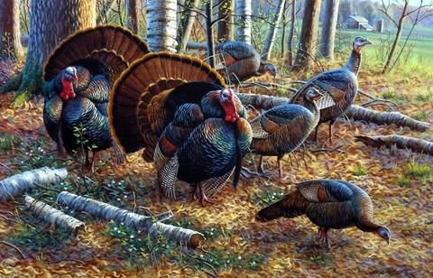 turkeypaint1
